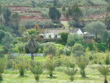 Quinta, Western - Countryside, Silves